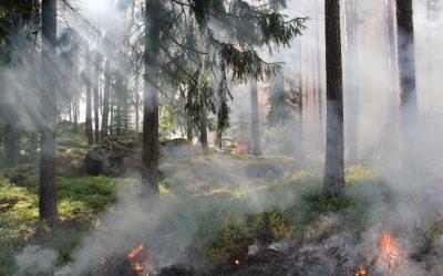 Kai kurioms rūšims išsaugoti reikia… ugnies