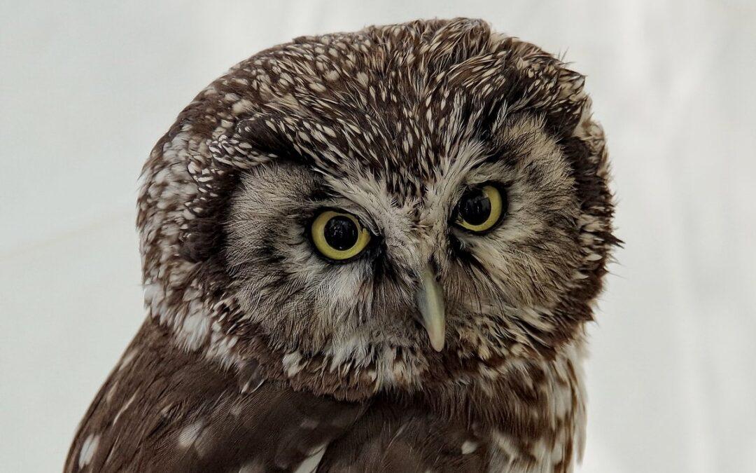 LRT Mokslo sriuba: Paukščių stebėsena Lietuvoje – vietoj ornitologų žygių naudojami specialūs įrenginiai