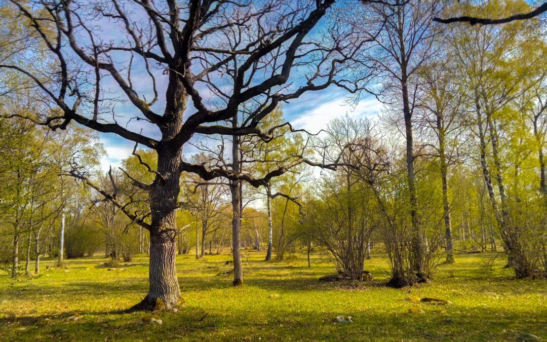 """Kviečiame saugomų teritorijų specialistus į seminarą """"Kalbame apie Natura 2000"""""""
