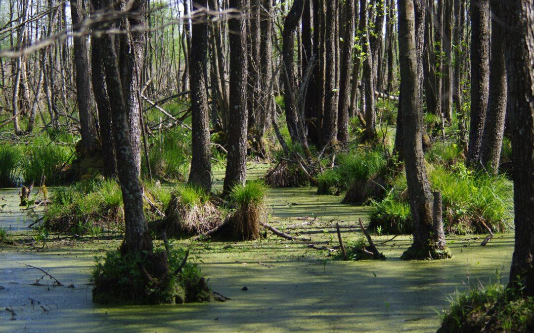 Pristatytos miško buveinių tvarkymo rekomendacijos. Iki balandžio 6 d. priimami pasiūlymai jų tobulinimui