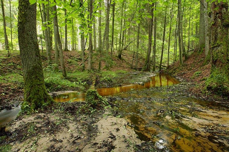 Kviečiame į EB svarbos natūralių miško buveinių tvarkymo rekomendacijų pristatymą