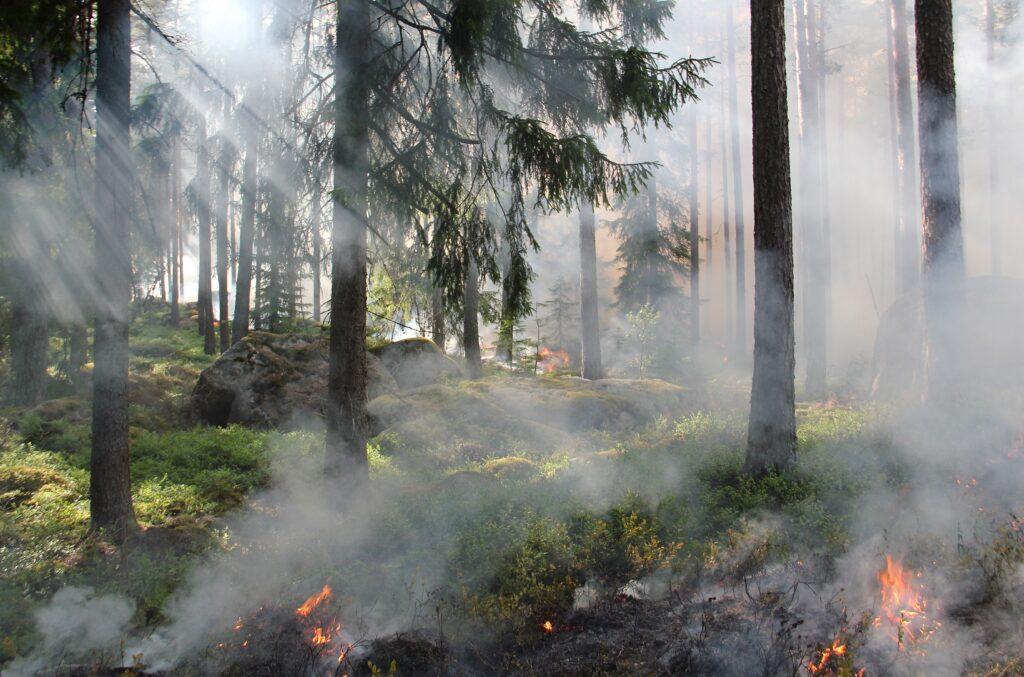 miškas, kontroliuojamas deginimas