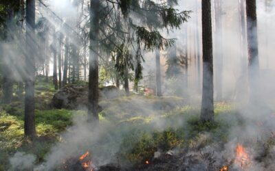 Take part in an international seminar about the role of fire in forest ecosystems
