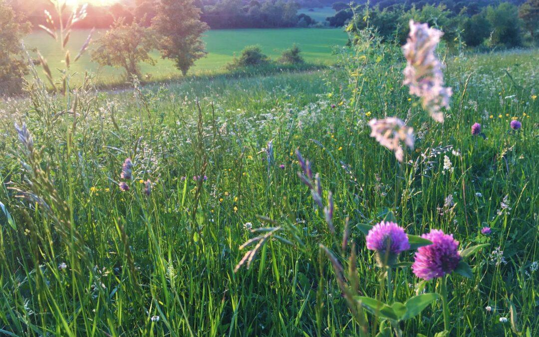 """Tarpiniai deklaravimo """"Agrarinė aplinkosauga ir klimatas"""" veikloms rezultatai (2021 06 07)"""